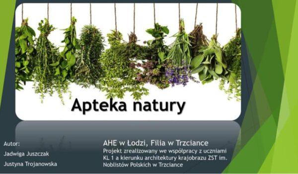 suszone zioła - apteka natury